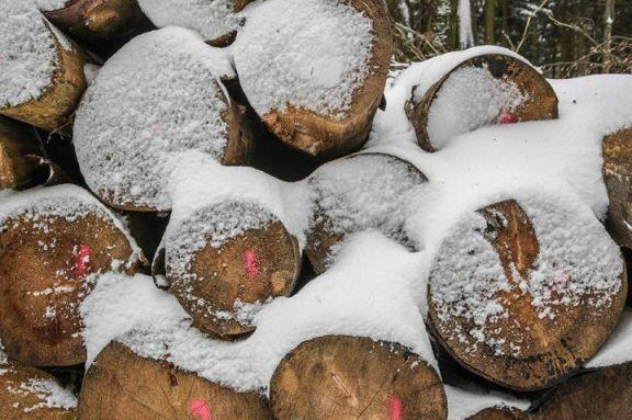 美国木材期货大幅上涨,创历史新高