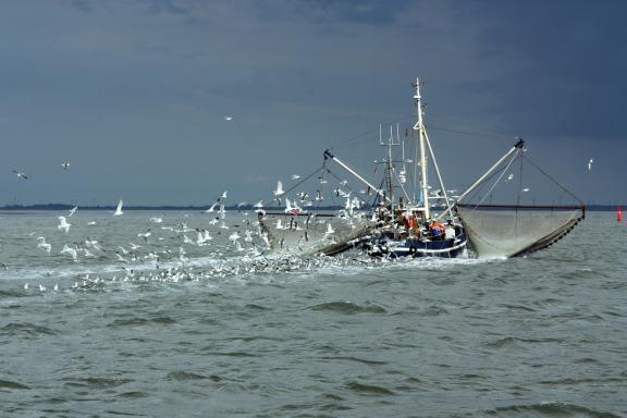 欧盟启动 1.24 亿美元的项目以提振柬埔寨渔业